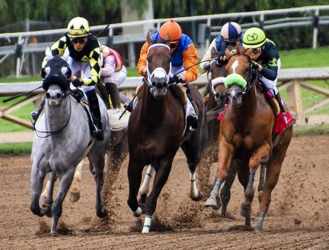 horse racing in the Gulf image to represent the text