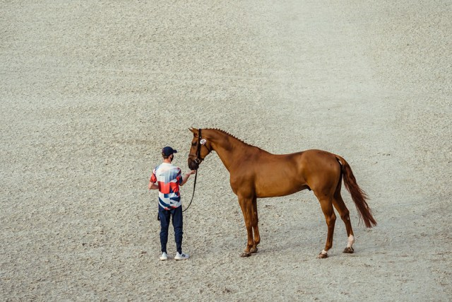 Showjumping Tokyo Olympics Games - FEI 2nd horse inspection Jumping 341 - GBR - Maher Ben ride Explosion W Photo Copyright © FEI/Christophe Taniére