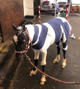 foal set alight