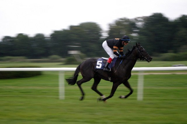 GB racehorses not to enter food chain following euthanasia