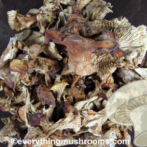 Chanterelle Mushrooms, Cantharellus cibarius - bulk by the ounce