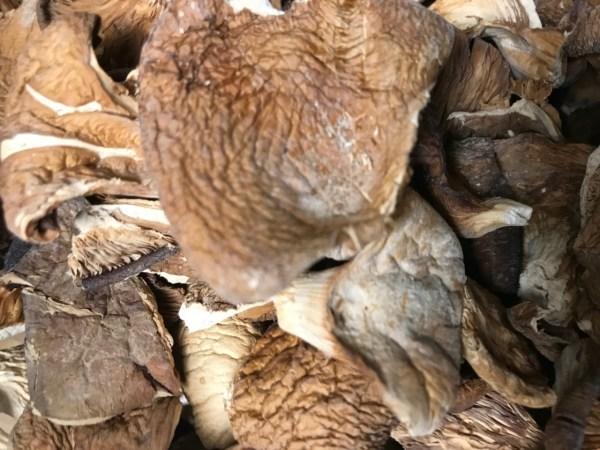 Oyster Mushrooms, Pleurotus Ostreatus - Bulk by the ounce