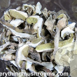 Porcini Mushrooms, Cèpe, Boletus edulis - bulk price/ounce