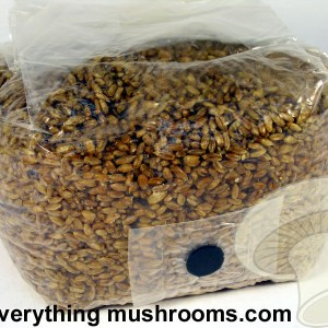 Sterilized Rye Mushroom Grow and Spawn Bag w/ injection site - 2lb  USE WITHIN 2 DAYS OF RECEIPT