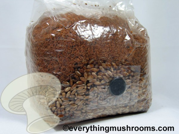 Supplemented Sawdust Block w/ Rye Grain Pocket, Mushroom Grow Bag w/ injection site - 3lb USE within 2 days of receipt