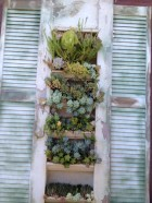 Succulent Vertical Display