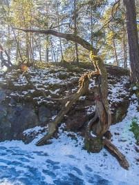 Stockholm Nacka Nature Reserve Mar 2017-9