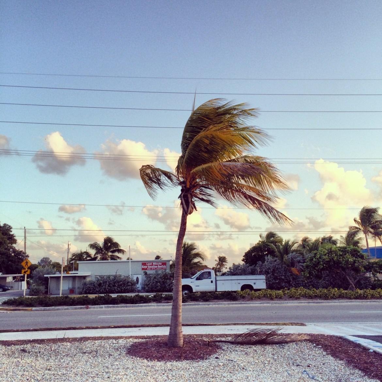 Florida Keys, Palme