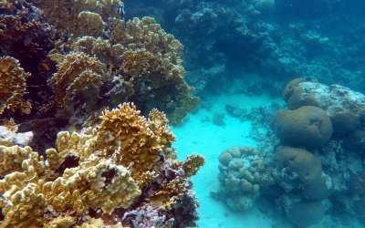 Unterwasserwelt bei Aqaba im Roten Meer
