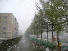 Green trees, white snow.
