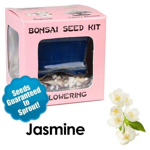 Jasmine Bonsai Seed Kit