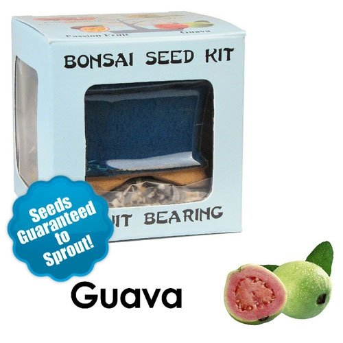 Guava Bonsai Seed Kit