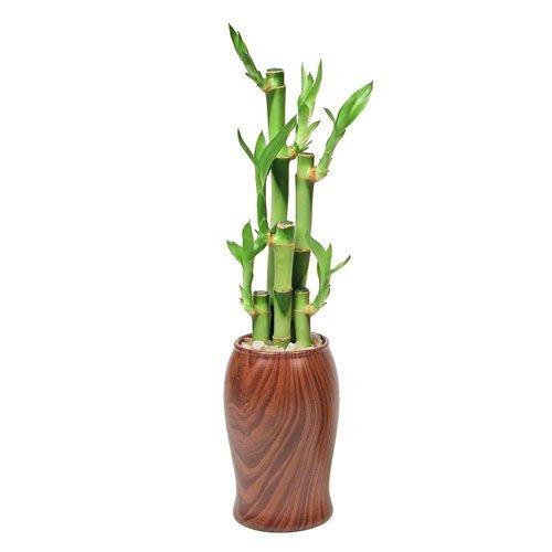 Emotion Vase Lucky Bamboo Woodgrain