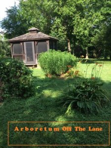 Darren's Arboretum -Next Lane Farm