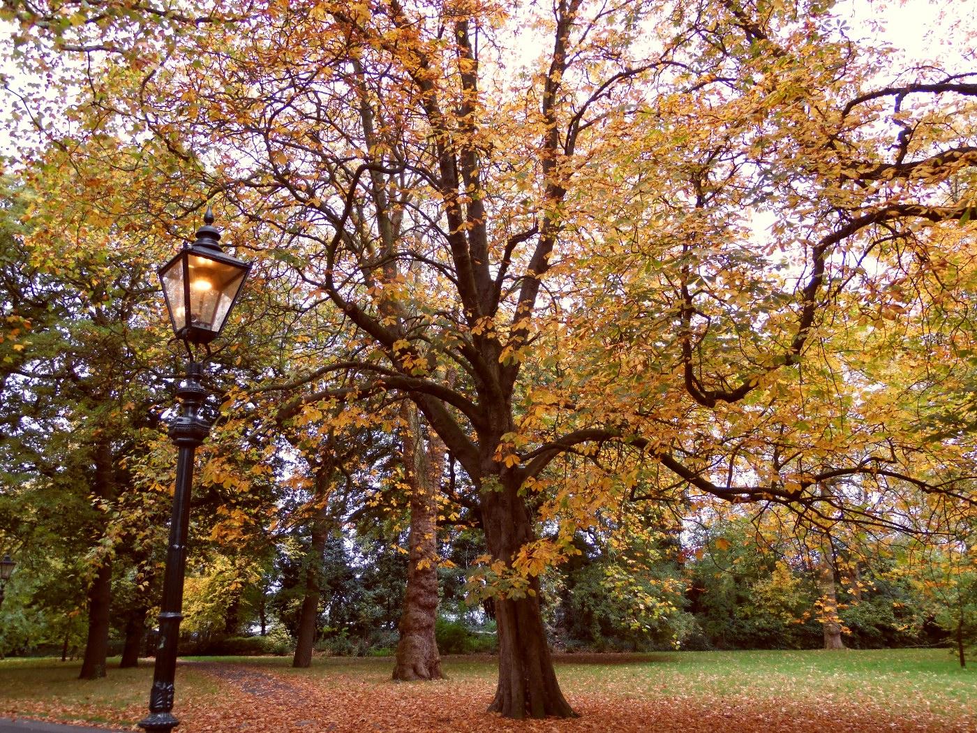 Les parcs de Londres en automne