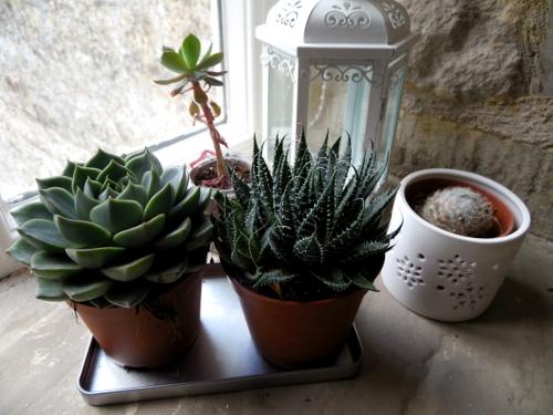 Jolies plantes :D