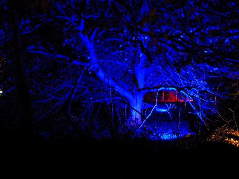 Botanic Lights : Déception au Royal Botanic Garden