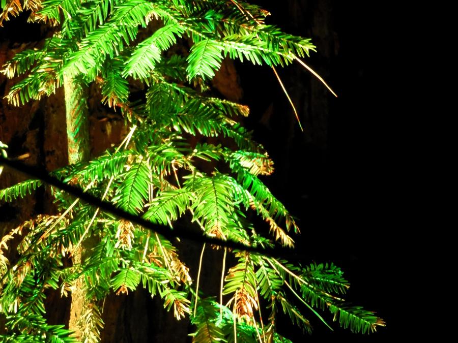 Botanic Lights : Déception au Royal Botanic Garden