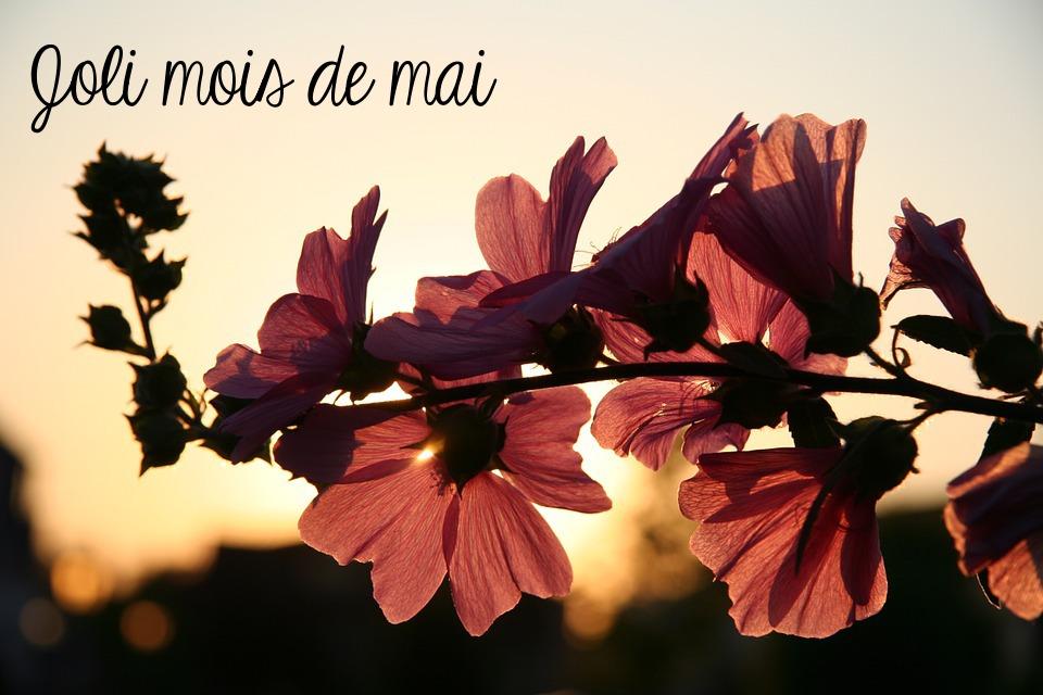 Chroniques anglaises 18 : Bonjour mai !
