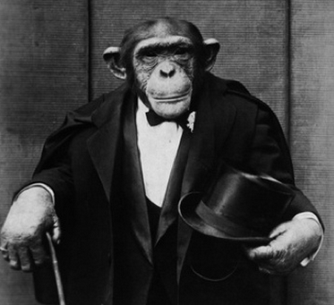Chimp Manners