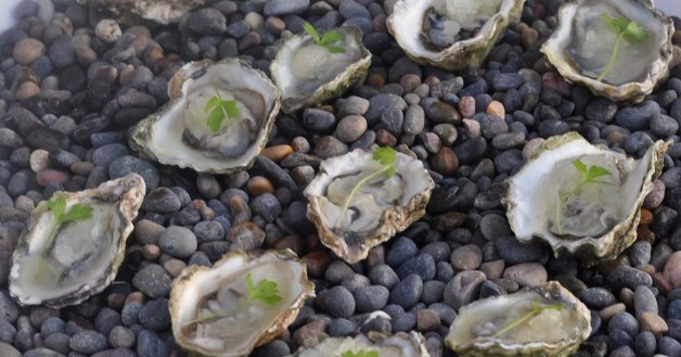 salsipuedes-oakland-oysters