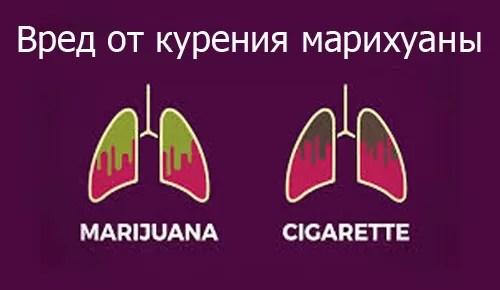 marihuana-harm