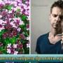 foto-chabrets-i-kurenie-protivopokazaniya