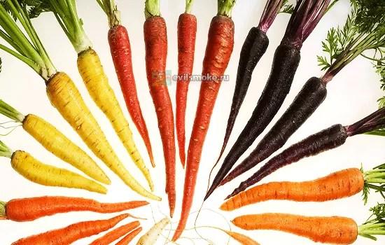 Фото - Разноцветный корнеплод