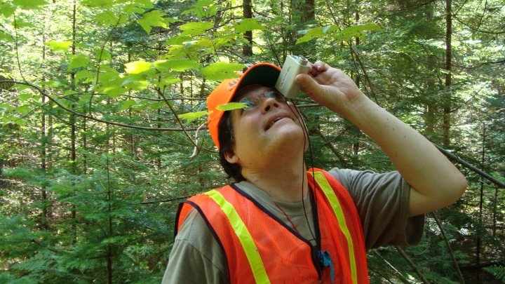 tree counting