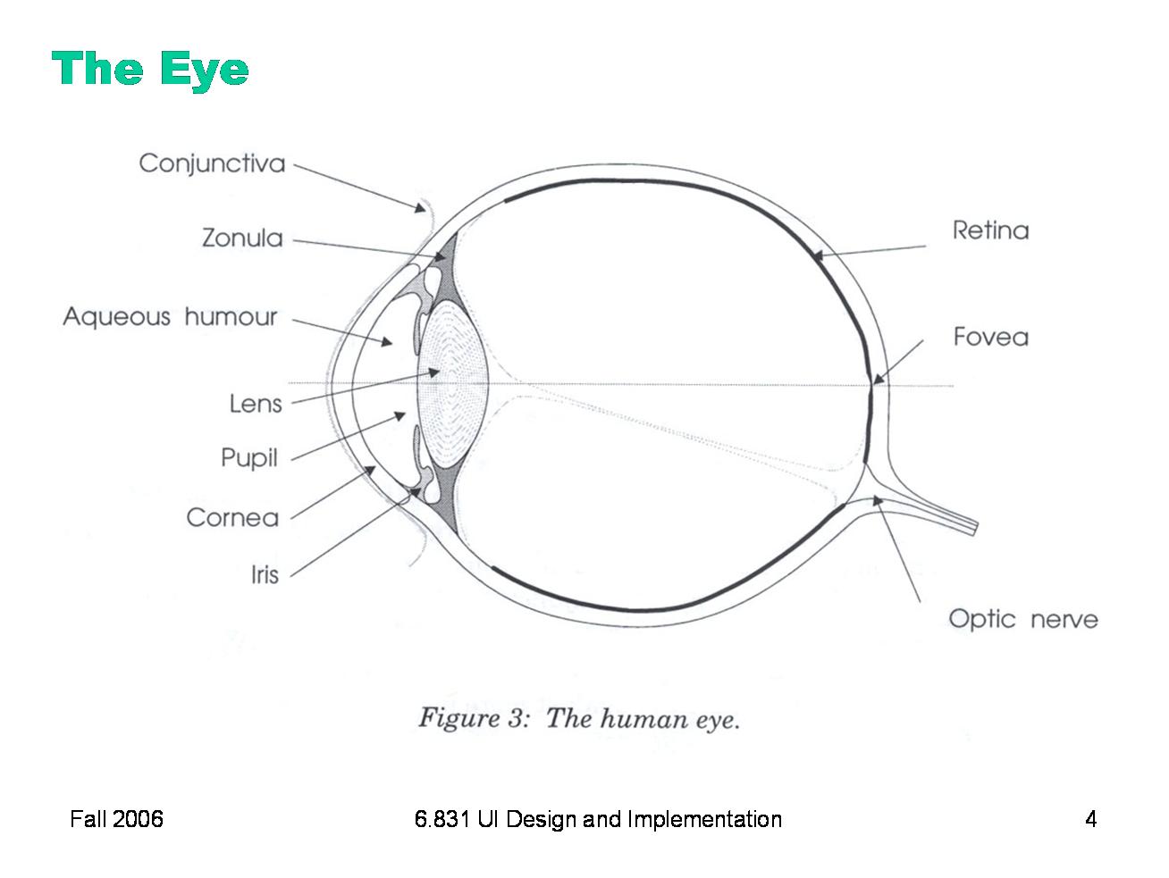 Blank Human Eye Diagram