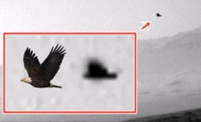 На Марсе заметили огромную птицу