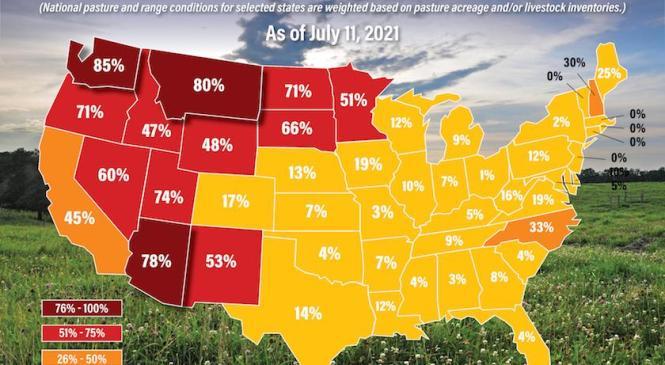 Состояние пастбищ в США с каждым годом ухудшается, а это плохо для инфляции