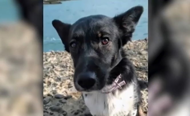 Сбежать за 60 секунд: Как собака Ева переполошила аэропорт