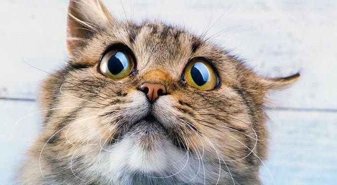 Котов беспокоит запах хозяина, если его нет рядом