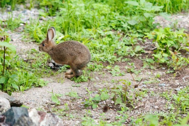 image of a bunny speeding away mid hop