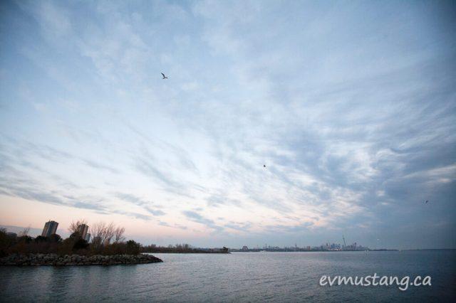 humberparkgulls