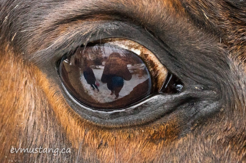 image of the photographer reflected in the eye of a horse
