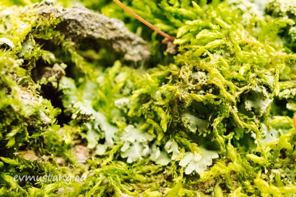 close up macro image of moss and lichen on a fallen log