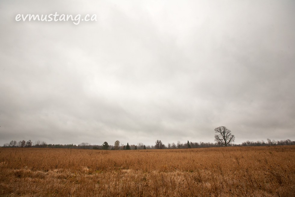 image of a wide field with a single tree to the side