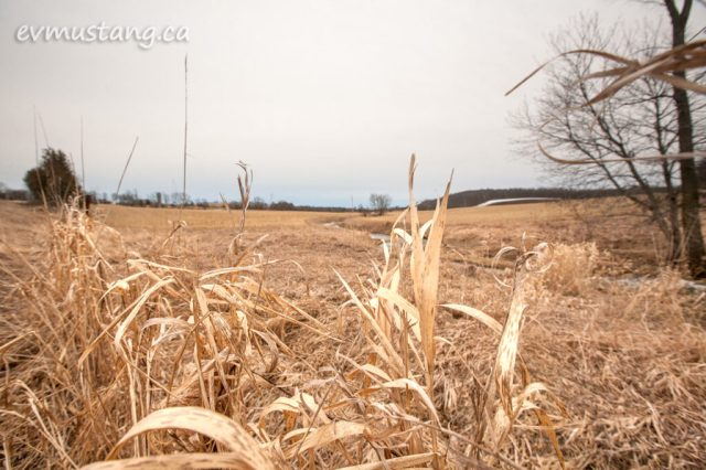 image of farmland with last year's grass standing golden brown against the fence line in the foreground