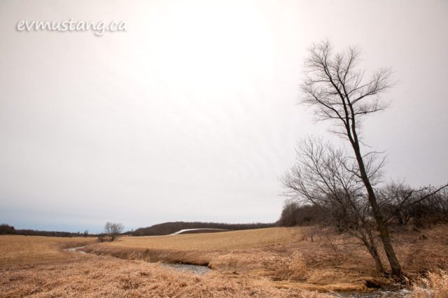 image of a farm field with a tall lone tree and stream running into the distance