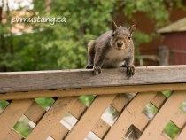 Squirrels, Squiddles, SQRLS