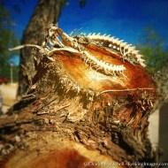 Snake Skeleton - Dragoon, AZ
