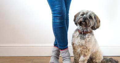 low angle view of cute little dog sitting next to owner standing and wearing denim jeans cozy socks