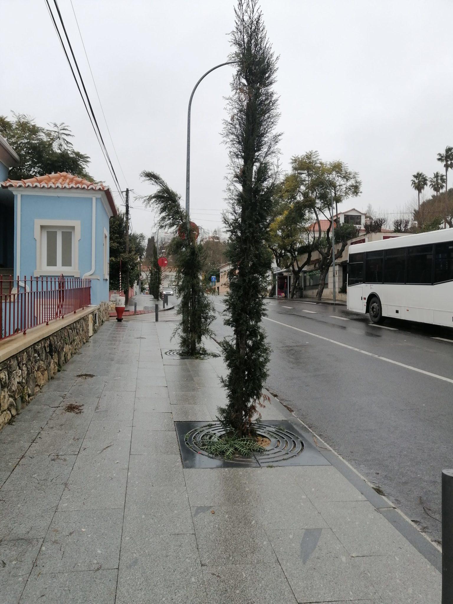 ciprestes rua conde de alcáçovas - Paço d'Arcos