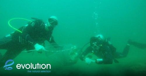 los bamboos dive site cleanup evolution diving resort malapascua