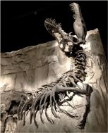 Albertosaurus Black Lizard Tyrrell Museum Alberta Canada