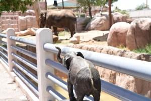 Elephants in El Paso zoo