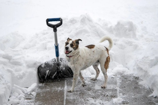 Snow being shoveled by a dog