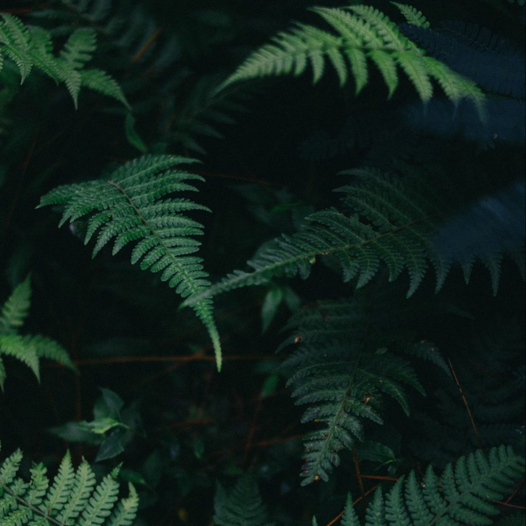 fern leaves in dark
